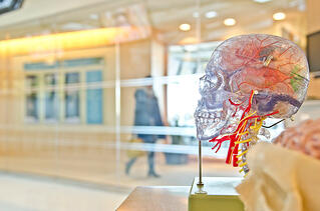 brain-disease-model-of-addiction